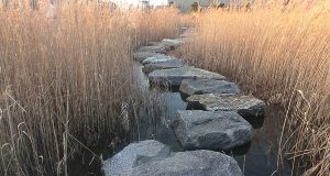 Stones wind their way through a creek. Looking at A and Z without seeing the steps in between is one aspect of fear.