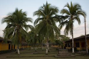 Palm trees at school in El Valle, Bahia Solano