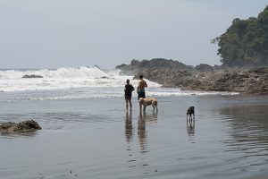 Playa Larga with two guide dogs and tow others looking toward the ocean.