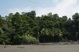 Playa Larga, the jungle meets the ocean here in El Valle, Bahia Solano.