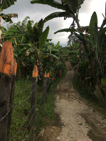 Driveway leading to Don Elias coffee farm Salento, Colombia
