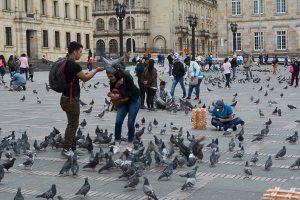 Pigeons in Plaza de Bolivar in Bogota Colombia