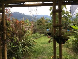 A view out the back of our airbnb in salento, colombia