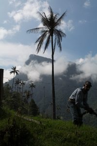 A man tending a fence in valle del cocora