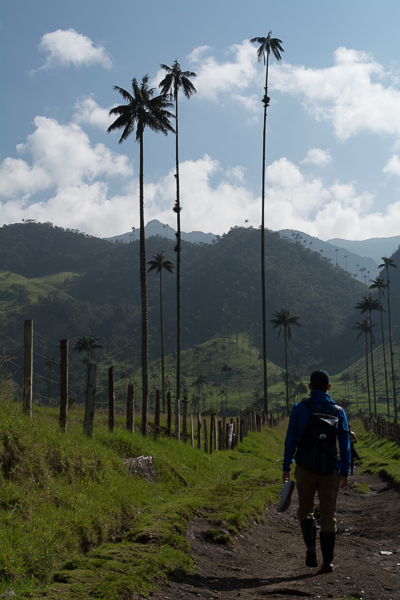 shadows in valle del cocora